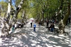 place-des-lices-Saint-Tropez